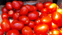 hàng cà chua