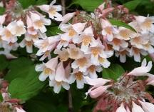 hoa đẹp không biết tên