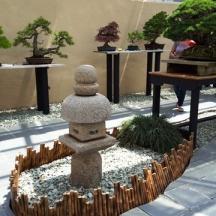lantern và bonsai