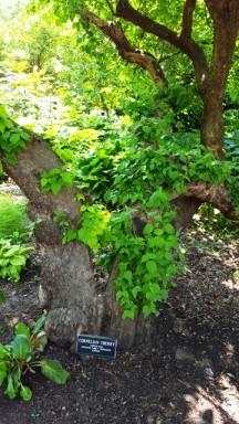 một gốc cây đầy u nần