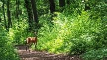 Nai ngơ ngác nghênh đón khách đi rừng.