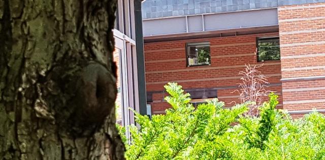 nhìn thấy hai cửa sổ