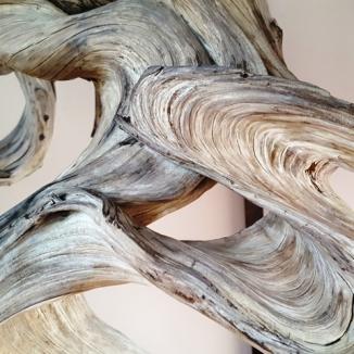Vân gỗ của cây Fudo. Đây là loại sargent juniper, nói chung là một loại thông