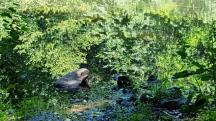 Tảng đá ở ven hồ Surprise nhìn giống như con cóc
