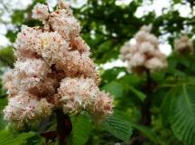 Hoa này cũng chung công viên, nở bùm sum sung mãn.