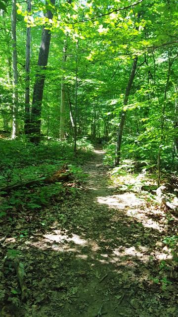 Ghi dấu một đoạn đường rừng mùa hạ, xanh mướt.