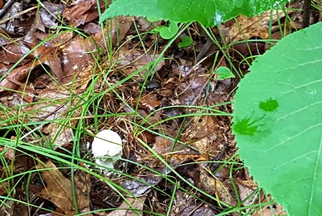 nấm mới mọc gần chiếc lá xanh