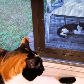 Đang ngủ chợt nghe thấy mùi của kẻ địch ở ngòai sân. Muốn lên cửa sổ nhưng béo quá lâu ngày không nhảy nên sượng sượng. May có bà đứng gần nên mình được bế lên cửa sổ. Nằm đây canh cửa, giữ giang sơn không cho hắn đến gần.