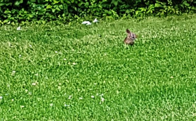 thỏ nâu rất bé say sưa ăn