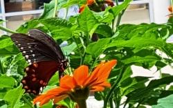 bướm và hoa