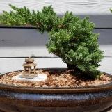 Chậu bonsai ở phố Tàu