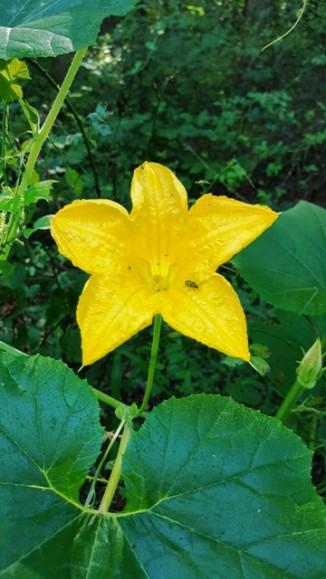 hoa bí