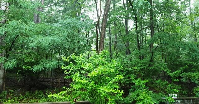 mưa rừng