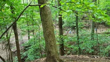 Thêm một đoàn hiking mấy chục người vừa người lớn vừa trẻ em đi trên đường mòn dưới chân núi.