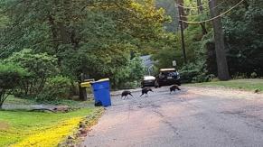 Vừa ra khỏi cửa gặp ba con gà lôi (turkeys). Lúc sau này ít thấy gà lôi lởn vởn sân nhà tôi. Hồi mới về gà lôi đi có đàn, gà bố gà mẹ gà con đi thành hàng kêu túc tác inh ỏi. Lâu lâu gặp lại thấy vui.
