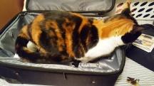 Nora đòi đi theo, leo vào túi hành lý ngồi chờ