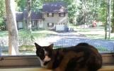 Nora thích nằm ở cửa sổ nhìn đời nhìn sang nhà hàng xóm, nhìn mấy con squirels chạy lắng quắng trên cây sồi.