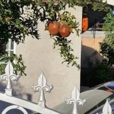 Cặp lựu treo lủng lẳng ở sân nhà bên cạnh ngôi nhà tôi ở trọ trong khu Anaheim.