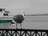 hải âu cô độc