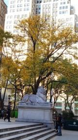 Con sư tử nằm dưới bóng cây mùa thu