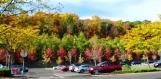 Tôi ghé walmart thấy hàng cây trên sườn đồi bên ngòai bãi đậu xe, trong nắng chiều màu sắc rực rỡ. Giá mà tôi có thể làm nổi bật màu cam ở phía sau hàng cây.