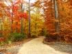 Đường chiều vào rừng thu