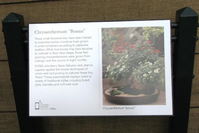 cuc-bonsai-3