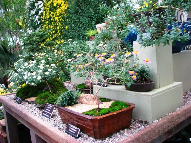 cuc-bonsai