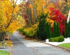 Một con đường nhỏ dẫn vào trong xóm lên núi