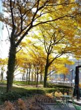 Bên ngoài một building, rất lớn, rất sang ở Newark, có hàng cây lá vàng trong nắng.