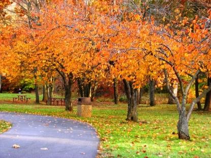 Hàng cây thấp viền chung quan sân baseball