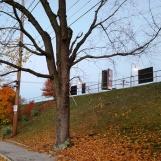 Buổi sáng đi làm, bụi cây lá vàng trên sân ga. Đèn dọc bên đường xe lửa chưa tắt.