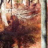 Đi rừng thấy một vùng cây đầy gai. Cây tàn úa, đổi màu, thành một vùng rộng vừa nâu vừa đỏ. Mùa xuân, nơi này nở nhiều hoa, loại hồng dại rất thơm.