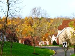 Rặng cây lá vàng phía sau làng chung cư
