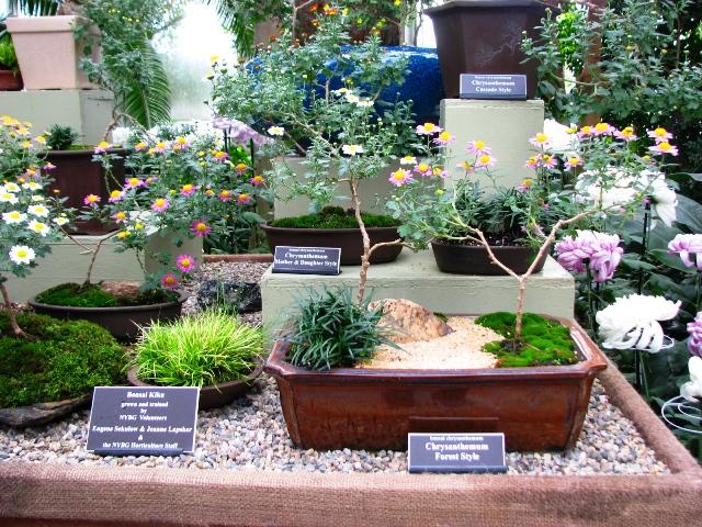 nhung-kieu-cuc-bonsai