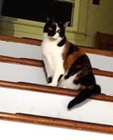 Nora nhát sợ không hiểu sao nhà có nhiều người quá