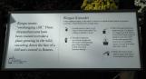 Cách trồng và uốn hoa cúc theo hình thác chảy, gọi là kengai