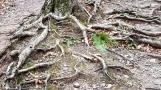 Rễ cây