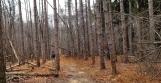 Rừng thông mùa đông có chút ánh sáng trong một ngày không nắng. Mùa hè nơi nầy rất tối vì cây cao che mất ánh sáng