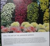 hoa cúc, nghệ thuật trồng hoa làm vườn của người Nhật