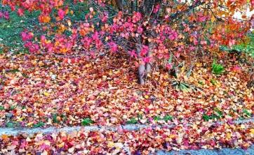 Những nét chấm phá cuối cùng của mùa thu