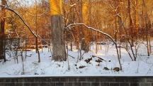 cánh rừng sau nhà trong nắng ban mai