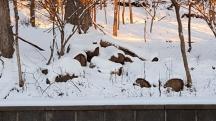 đống gỗ bị tuyết phủ trùm