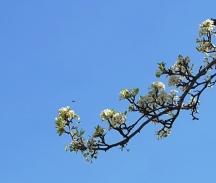 Đi ngang dưới nhánh hoa, nhìn lên thấy trời xanh