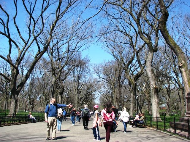 con đường rộng giữa hai hàng cây gọi là the mall
