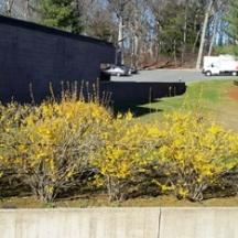 Hàng hoa Đầu Xuân ở góc sân Đại học Long Island