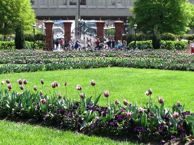 vườn hoa uất kim hương màu tím trước viện bảo tàng smithsonian