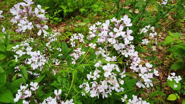 hoa dại hai màu tím và trắng