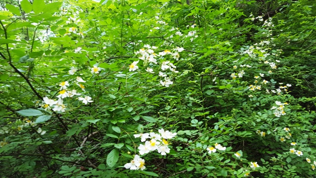hoa thơm