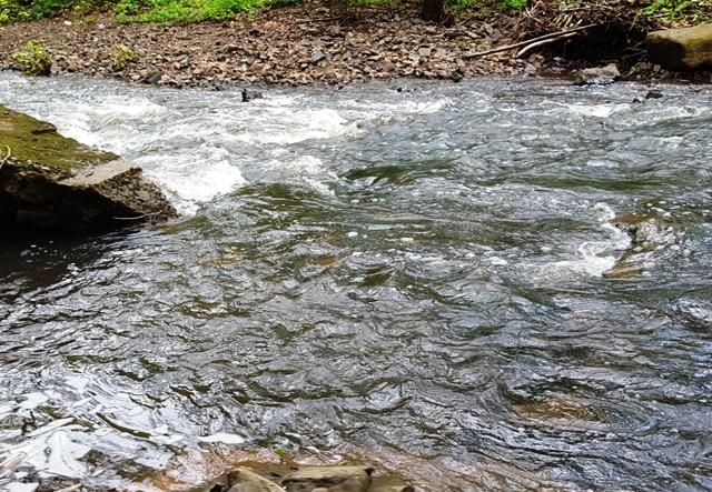 nước dâng đầy con suối